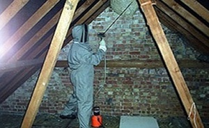 Wasp Nest in loft in Kings Bromley