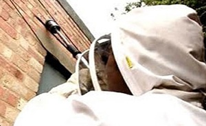 Wasp Nest Treatment Staffordshire